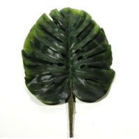 30cm Monstera Pick Bundle x 6