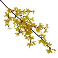 55cm Forsythia Spray