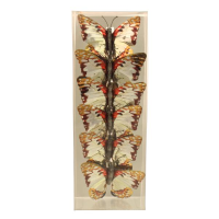 9cm Butterfly Set of 6