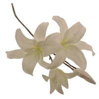 74cm Frosted Lily Spray