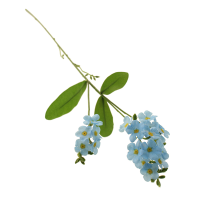 45cm Forget-Me-Not Spray